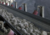 Cement_minerals_conveying